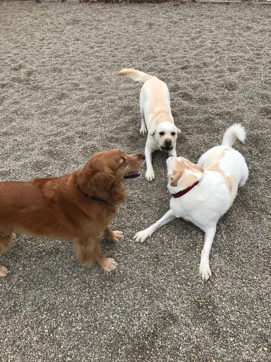 Duke, Murphy T. and Rosie get ready to race
