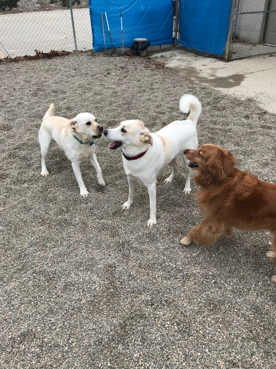 Murphy T. loves playing with Rosie and Duke