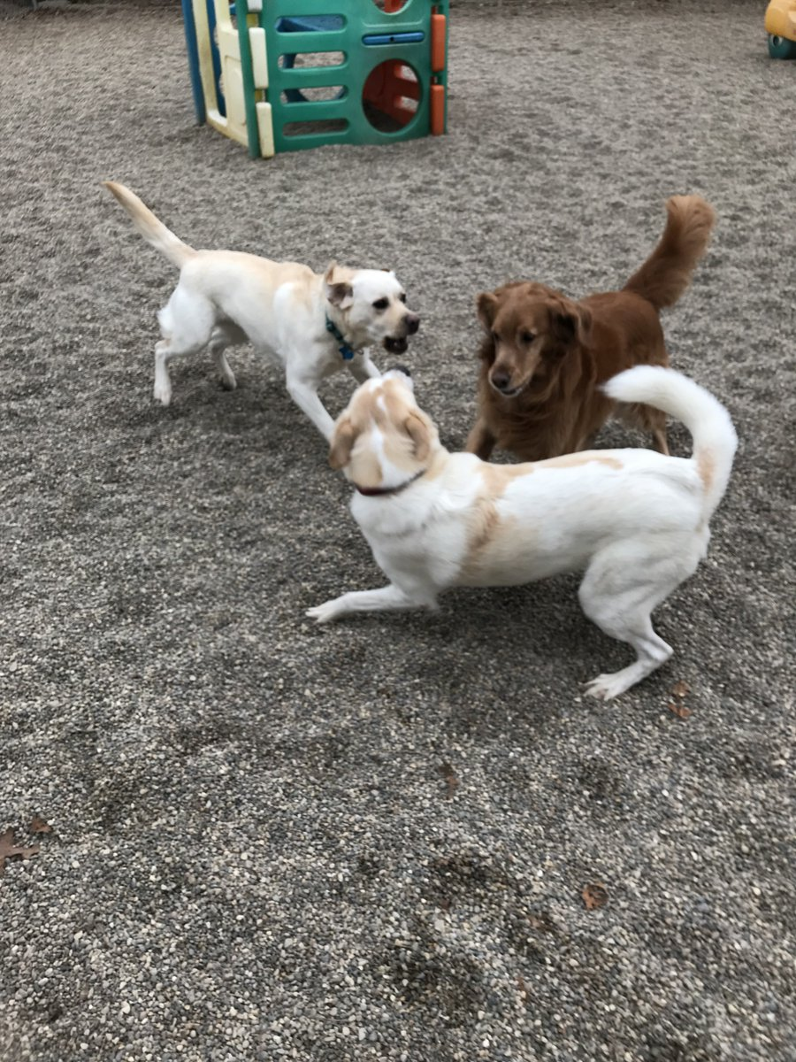 Murphy T. and Rosie ask Duke to play