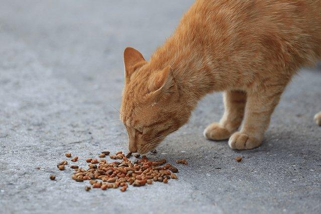 500RT:【憤り】神奈川の相模川で地域猫の毒殺相次ぐ、死骸の近くに「青い粉」 https://t.co/ayXJXV2cEV  11月18日に4体、25日に1体が見つかった。近隣住民は「昨年から相模川沿いで同様の事件が相次いでいる」と話す。