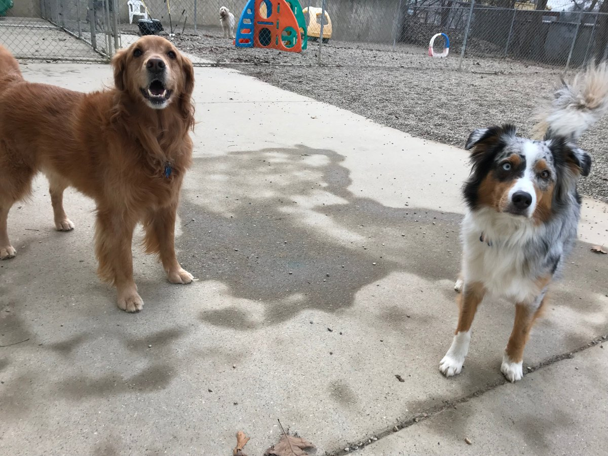 Rosie and Fergus pose for a picture