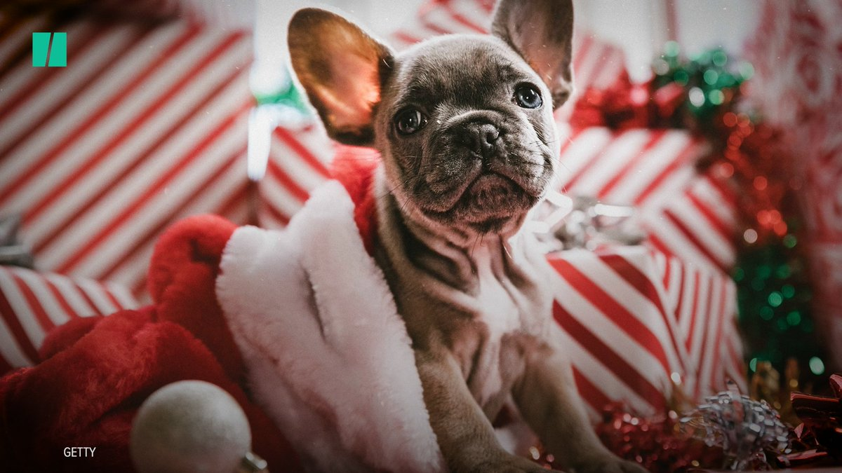 Take caution before giving someone an animal this holiday season.