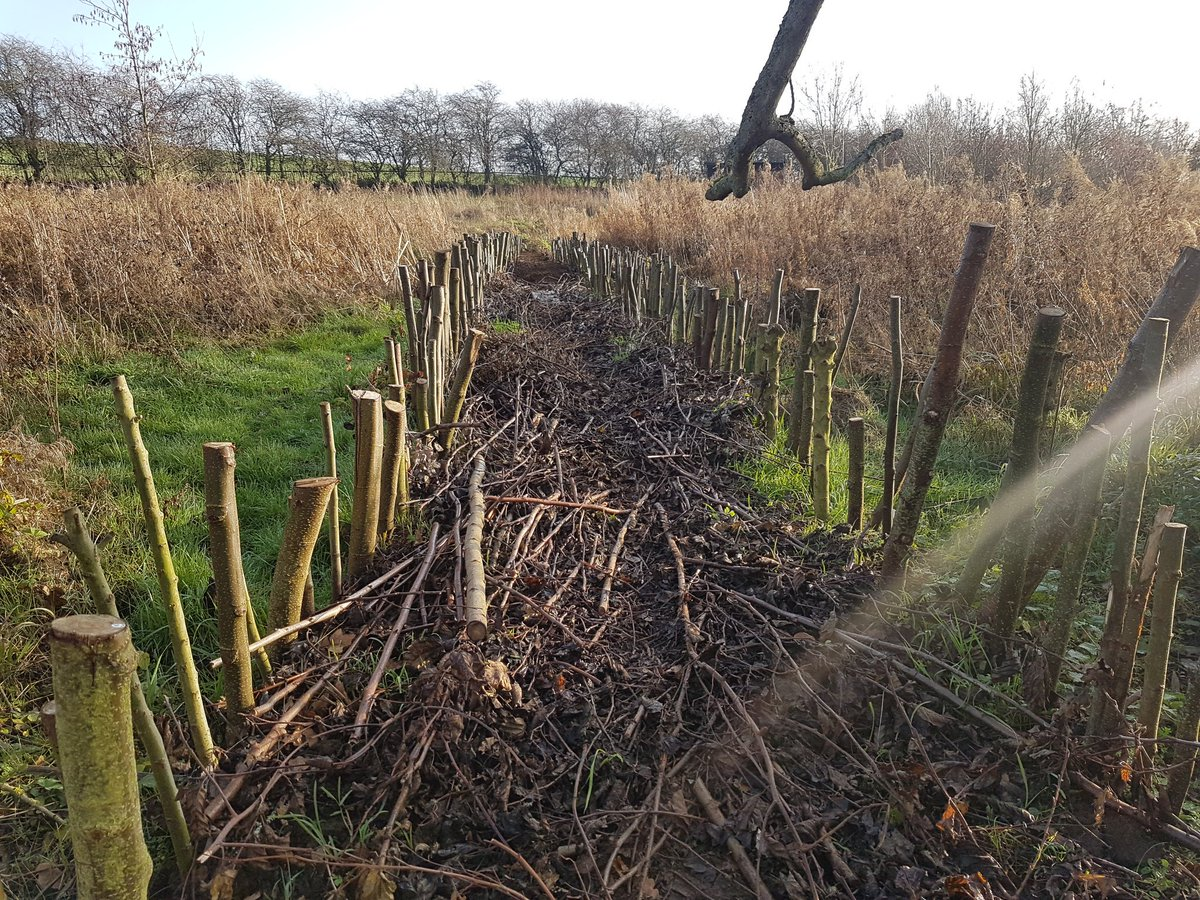 a meter wide dam made up of willow stakes and a layer of branches, onto which soil is laid...