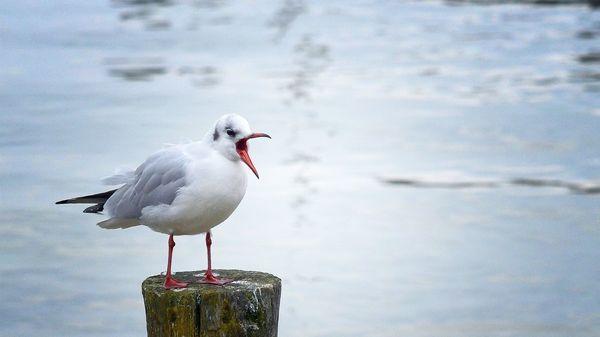 Danger pour les oiseaux : la pêche industrielle menace de nombreuses espèces d'oiseaux marins https://www.franceinter.fr/environnement/danger-pour-les-oiseaux-la-peche-industrielle-menace-de-nombreuses-especes-d-oiseaux-marins?utm_medium=Social&utm_source=Twitter#Echobox=1544546535…