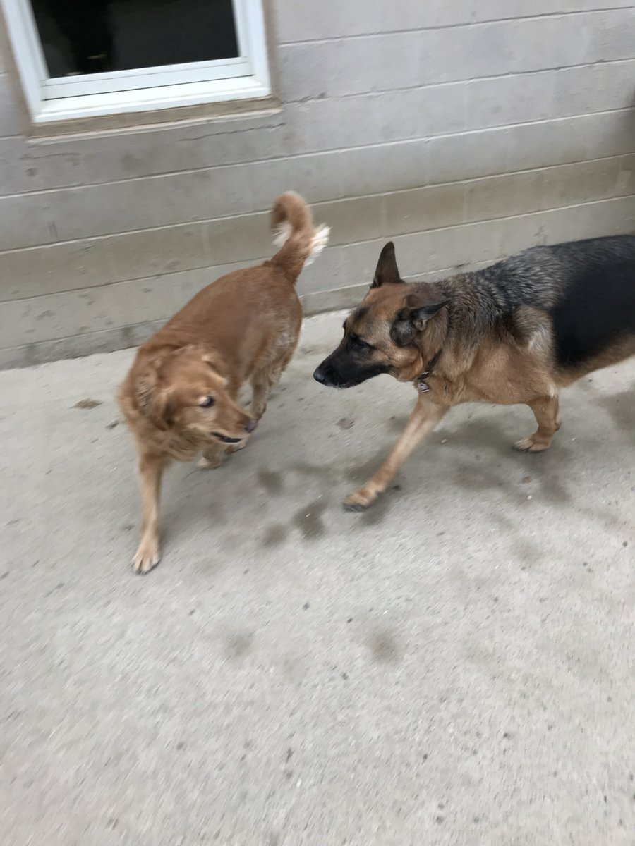 Scout gets Raven to chase her