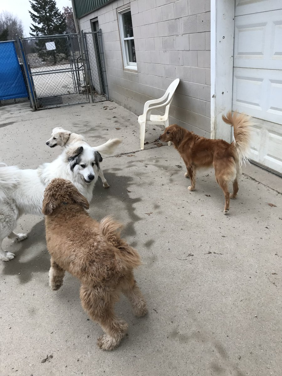 Carmine, Gerdi, Breslin and Maggie Mae love playing together