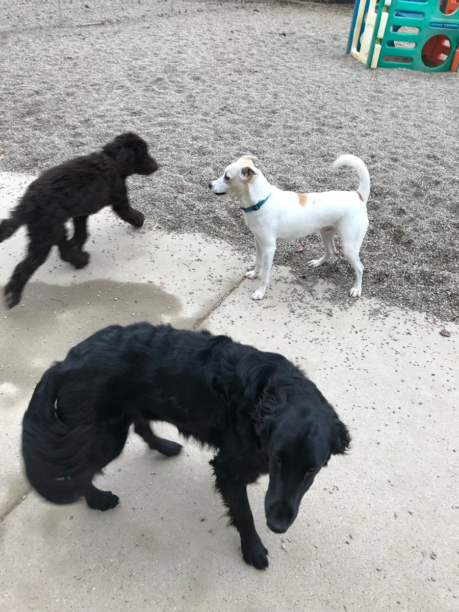 Koda B., Dakota and Emmet get ready to play