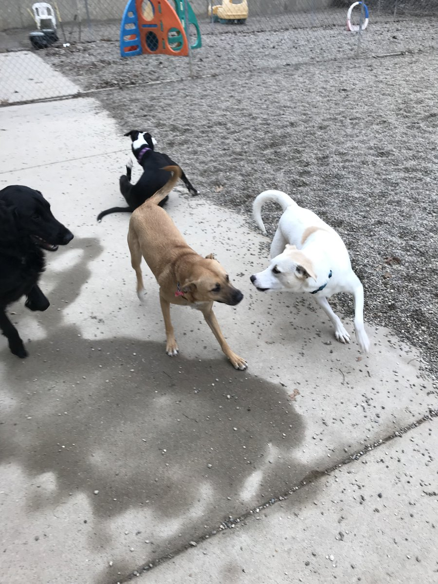 Dakota asks Zoe J. and Koda B. to play
