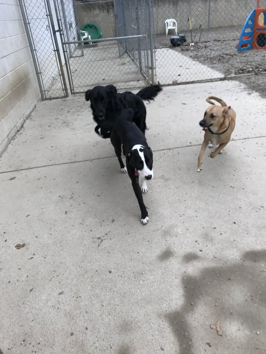 Sophie T. gets Koda B. and Zoe J. to chase her