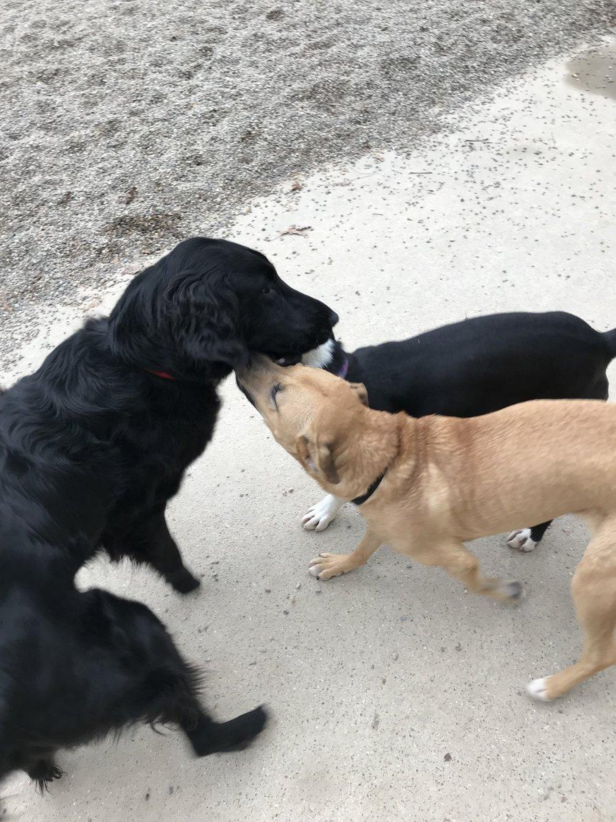 Sophie T. and Zoe J. give Koda B. kisses