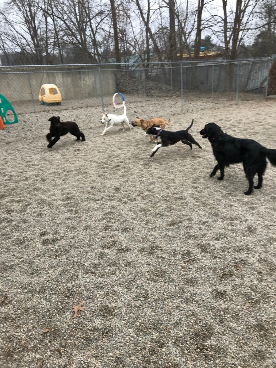 Emmet, Sophie T., Dakota, Zoe J. and Koda B. love to run