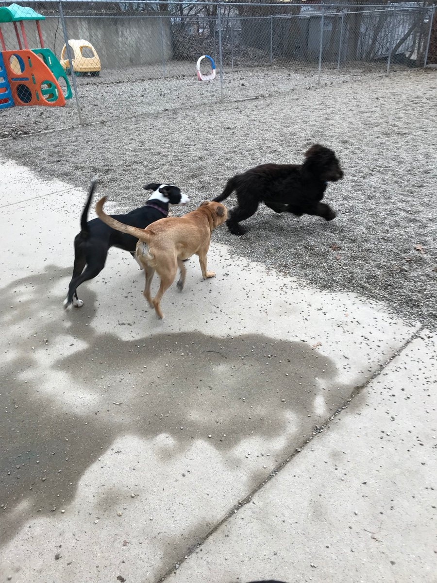 Emmet gets Sophie T. and Zoe J. to chase him