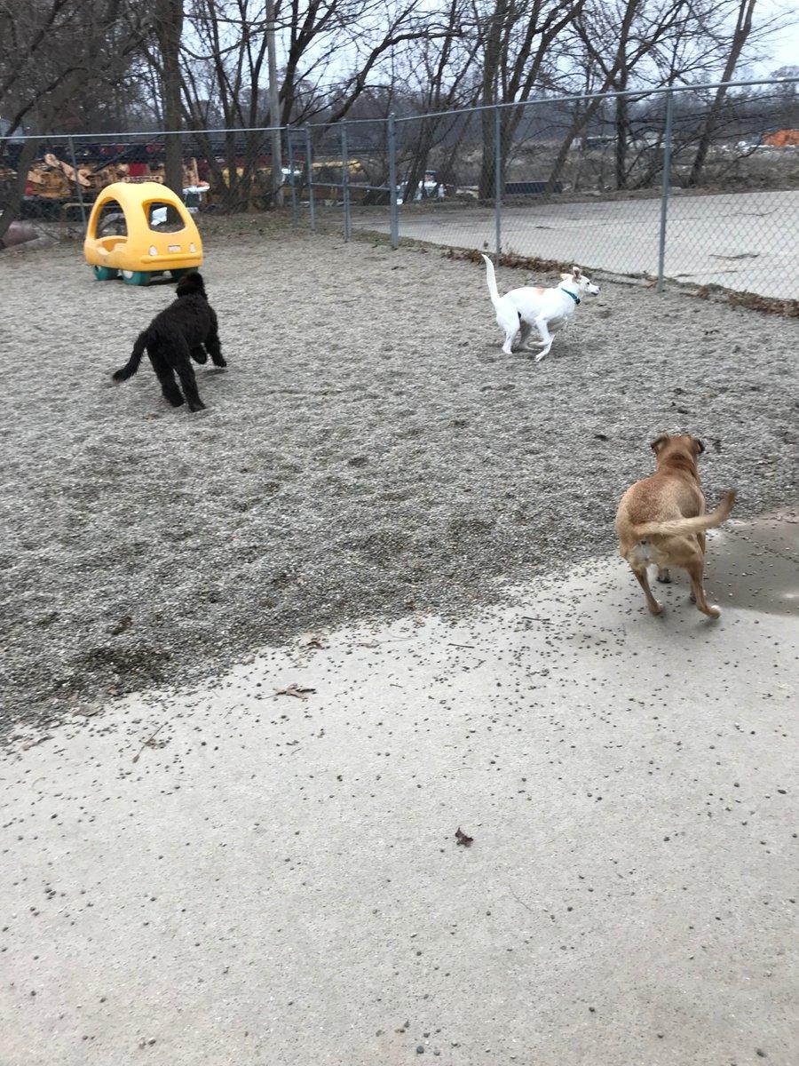 Emmet, Dakota and Zoe J. race around the yard