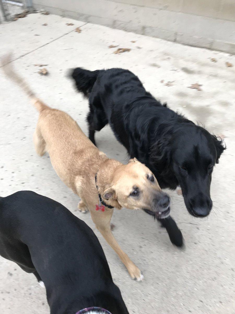 Koda B. and Zoe J. stroll by