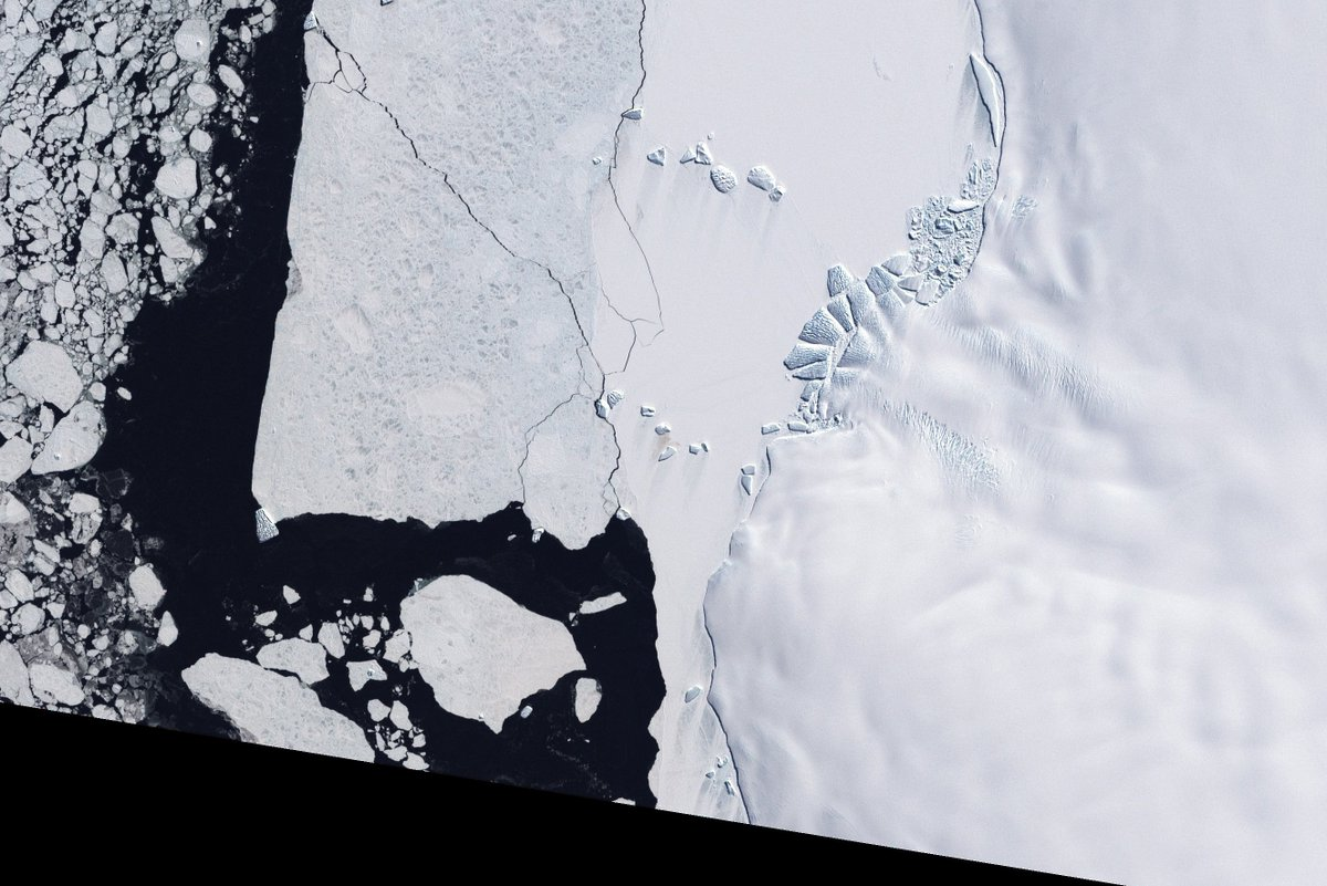 Landsat image of Antarctic ice with guano (poop) stains visible in the center of the ice