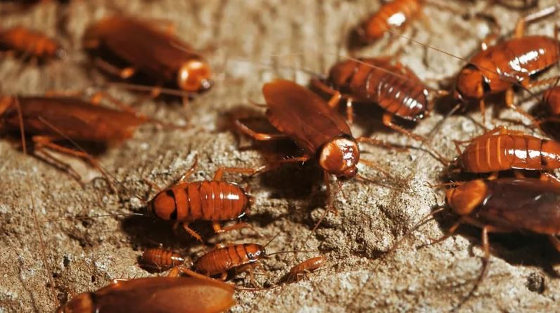 Watch: Cockroaches Becoming Big Business In China