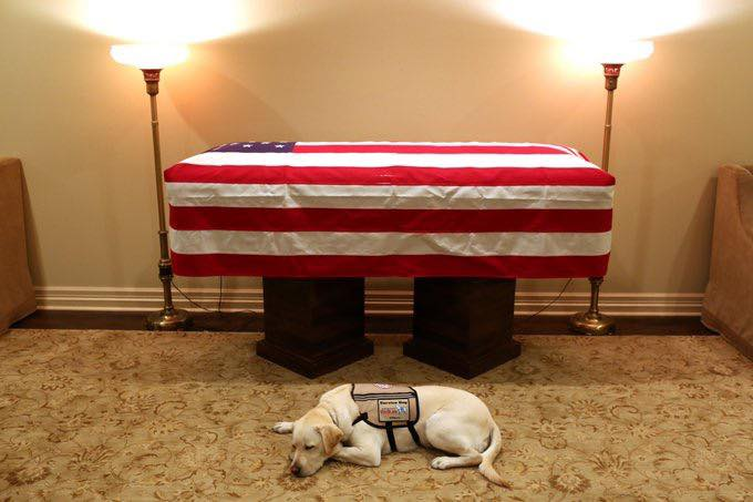 """One of the most poignant photos prior to President George H. W. Bush's funeral service was his service dog Sully in front of his flag-draped casket. Bush's spokesman @jgm41 simply tweeted the words """"Mission complete."""" #Remembering41"""