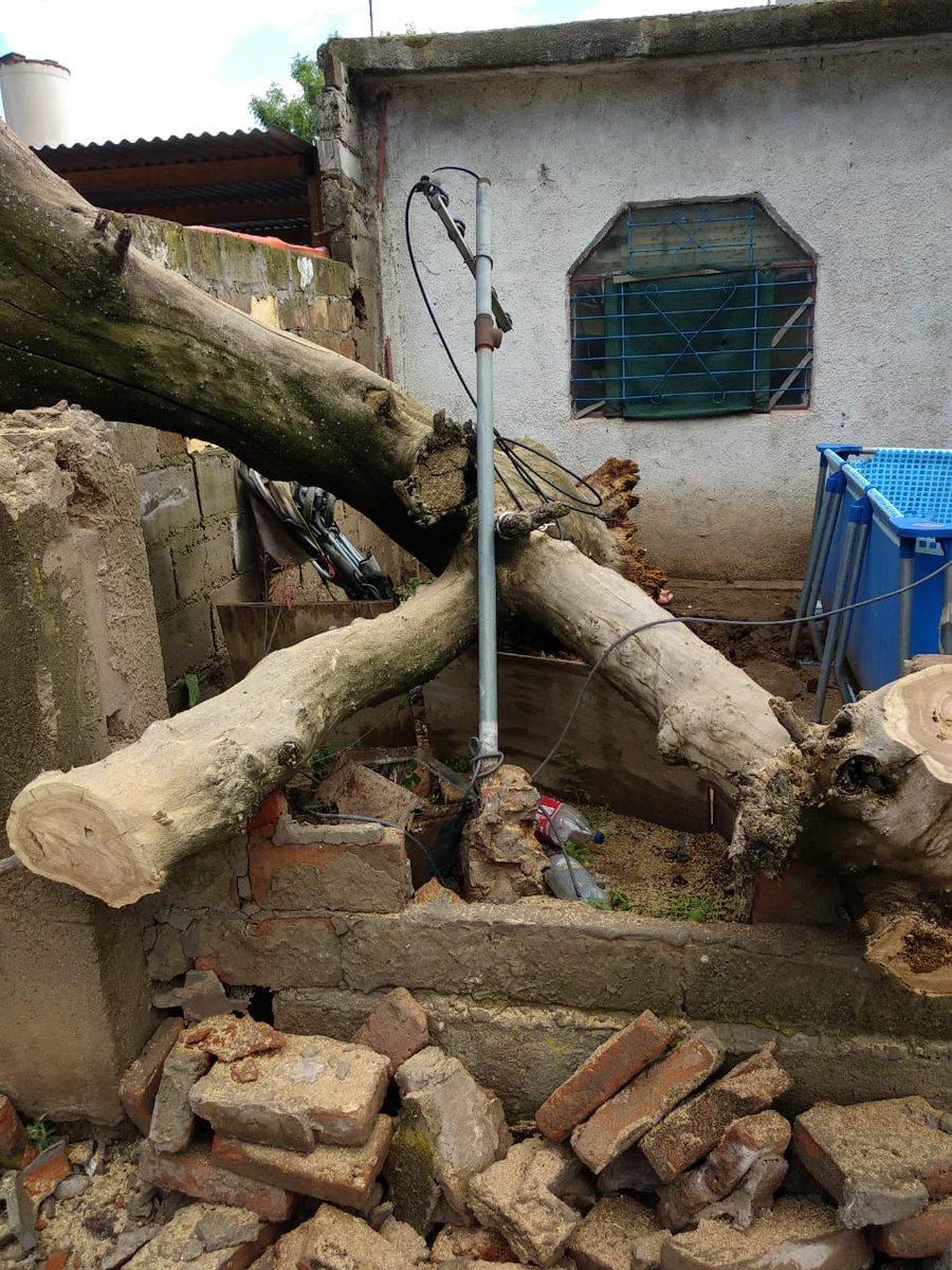 #SantaRosa | Extrayeron árbol caído durante la tormenta de ayer