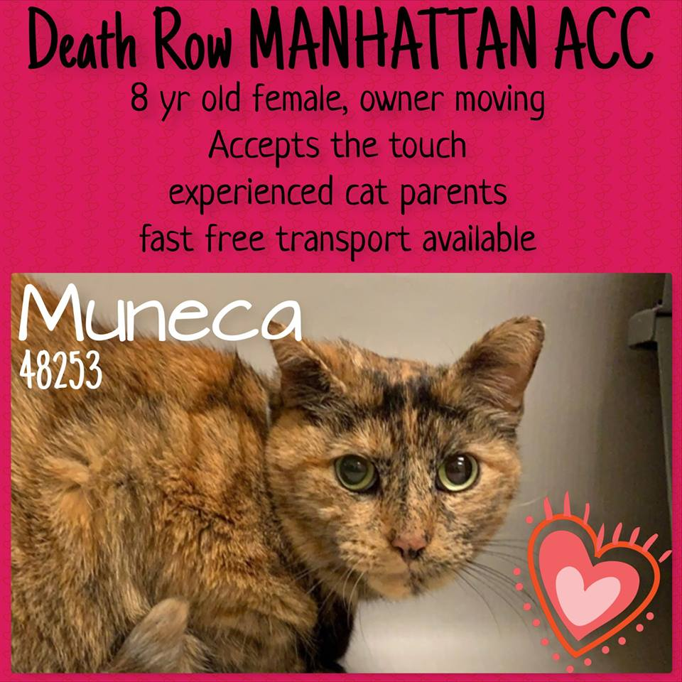 Must Love Cats NYC on Twitter: