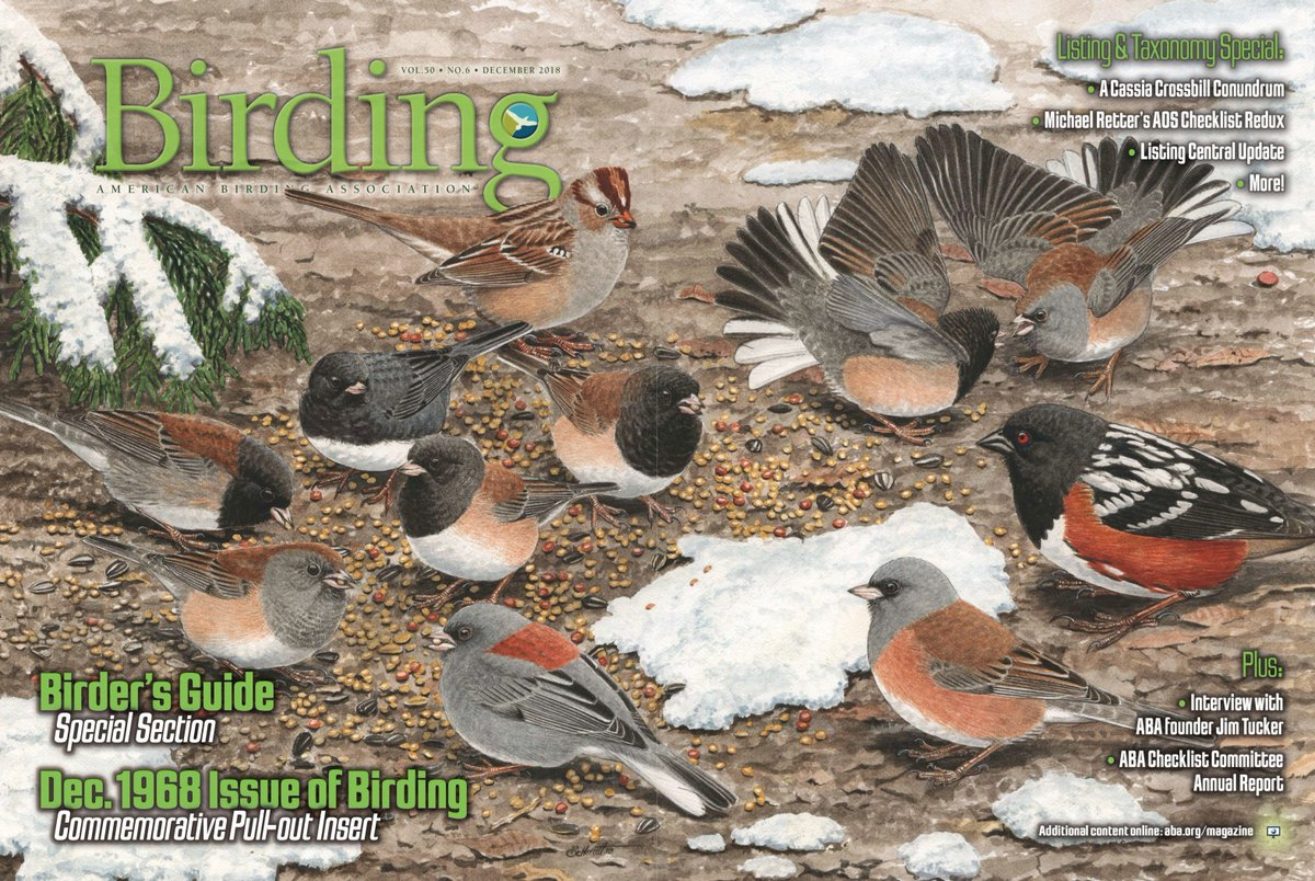 If you like juncos, youre gonna love the Dec. 2018 issue of Birding magazine, arriving in @ABA members mailboxes later this week. Join the @ABA today, and well rush you the Dec. issue (plus a whole lot more): aba.org/join/