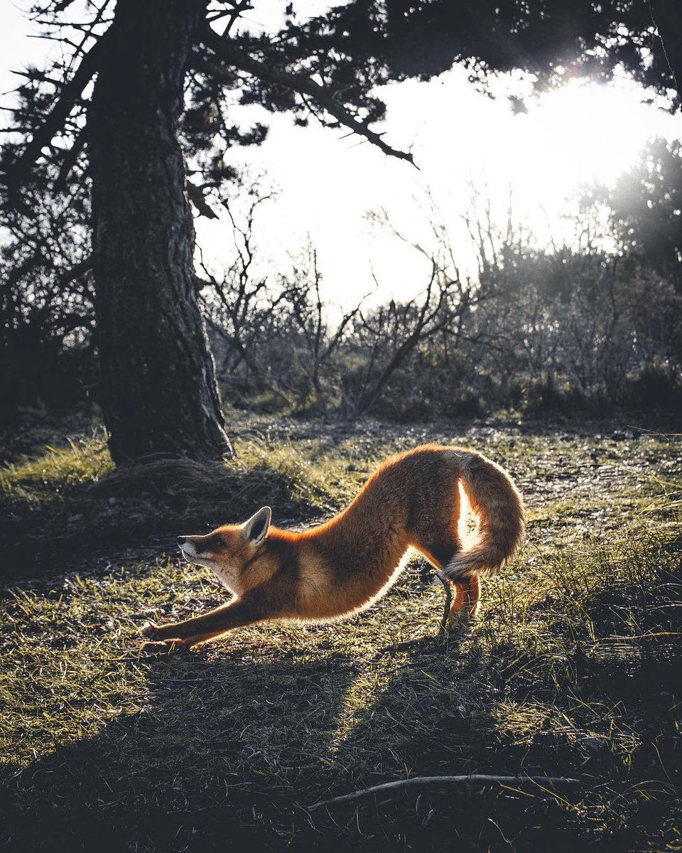Stretching out with a once in a lifetime shot for #WHPNaturalLight 🦊 instagram.com/p/BrRKO-QBXwE/