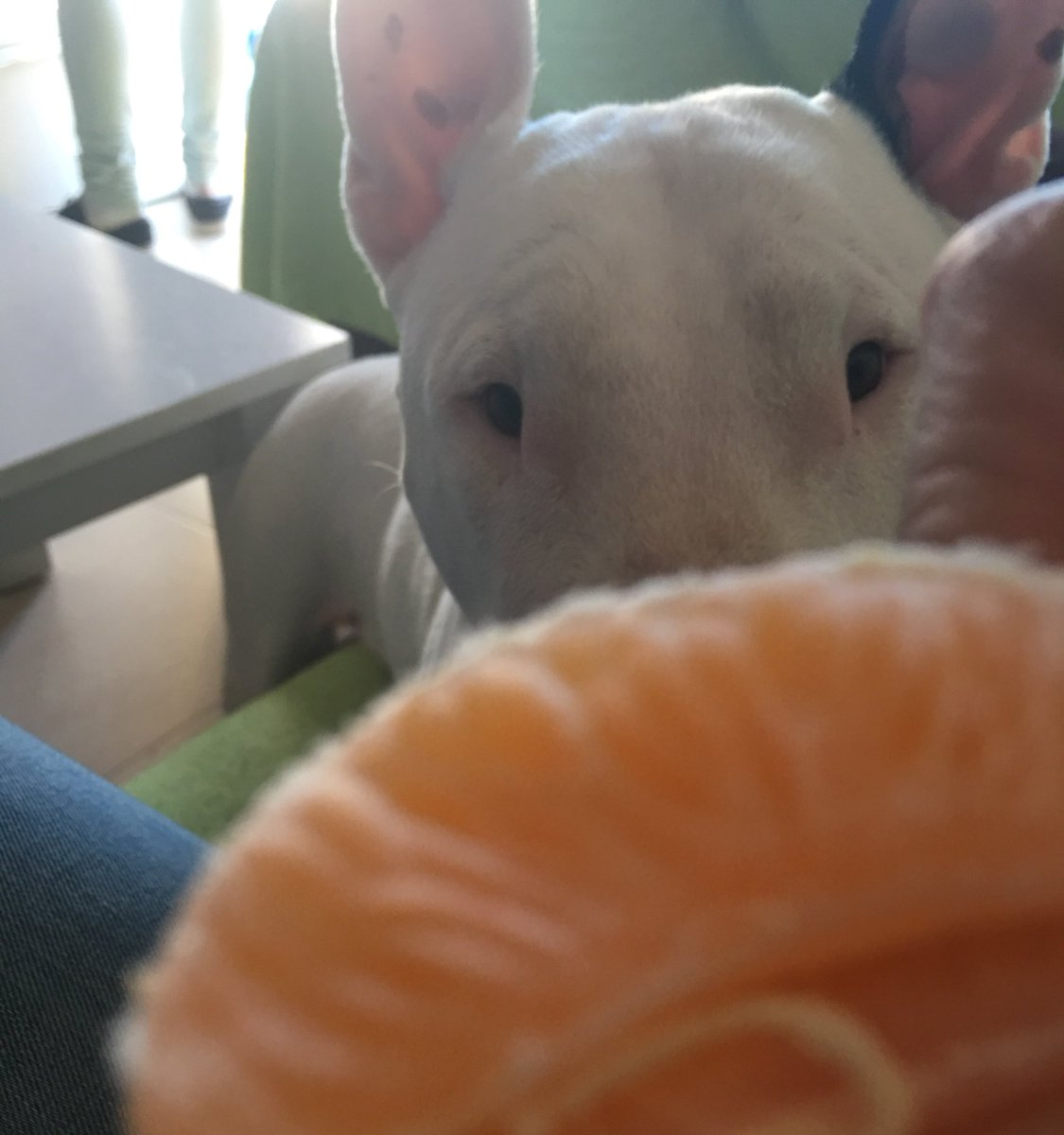 Dame, dame, dame, dame, dame  // Give me, give me, give me, give me, give me  // #bullterrier <br>http://pic.twitter.com/yM8o5Rp7UT
