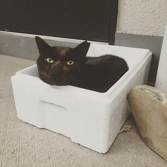 猫 ハウス 外