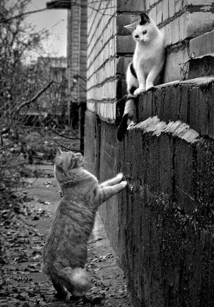 Romeo and Juliet <br>http://pic.twitter.com/qo6M7QnUU4