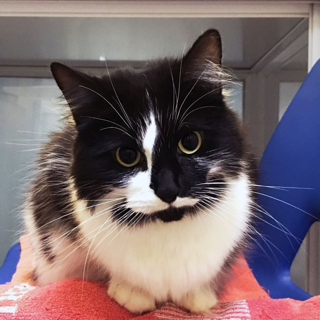Miam arrived with us when she was in need of vet care. 💜 She had spent the past few years living as a stray with a local community looking after her, but after staying with us, it was clear she needed a home. Could you give Miam a new start? 👉 mayh.ws/AdoptMiam