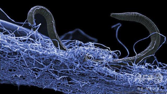 5000RT:【極限の生態系】地下深部に広大な「生命体の森」国際研究で発見 https://t.co/xsUPMWi0bj  これらの生命体は、何も摂取せずに岩から放出されるエネルギーのみを取り入れて生きているという。