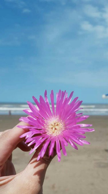 Tómate un momento en el día para ser 💞 Buenos días!!! #BuenMiércoles #FelizMiércoles Para tod@sss ☀ Photo