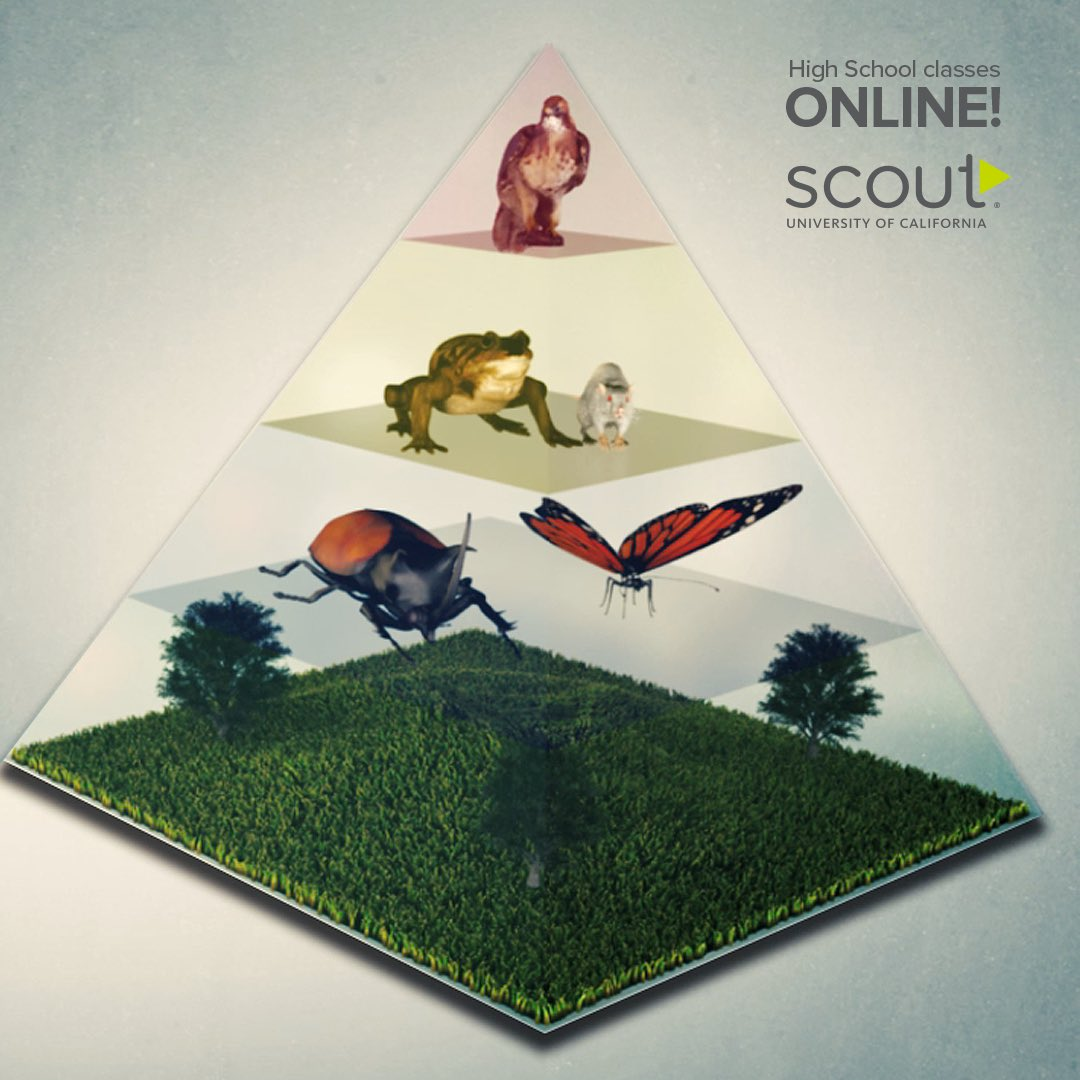 Scout (@UCSCOUT) | Twitter