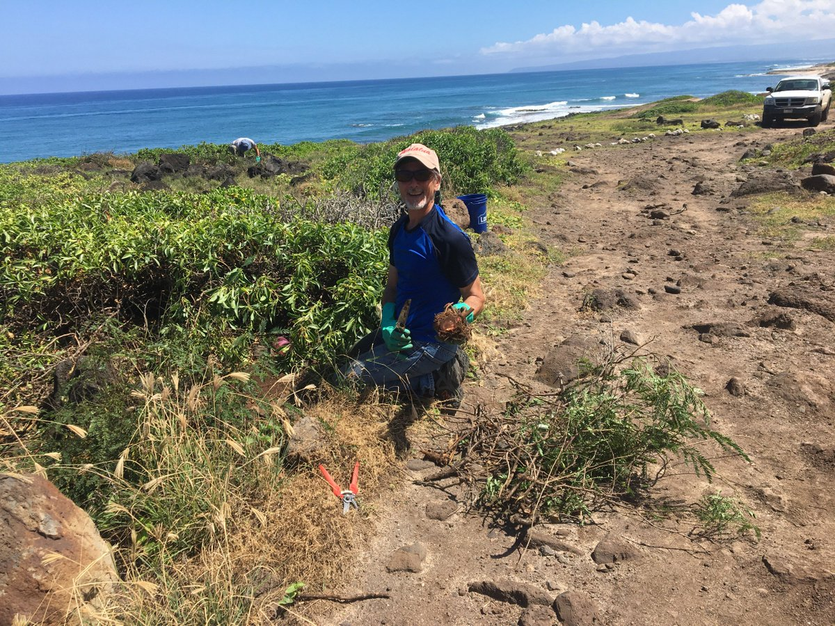 It's time to plant! This Saturday, December 15, join us in restoring native vegetation in the Mokulē'ia Section of Ka'ena Point State Park. https://www.facebook.com/HawaiiDLNR/photos/a.276310779076837/2332400743467820/?type=3&theater…