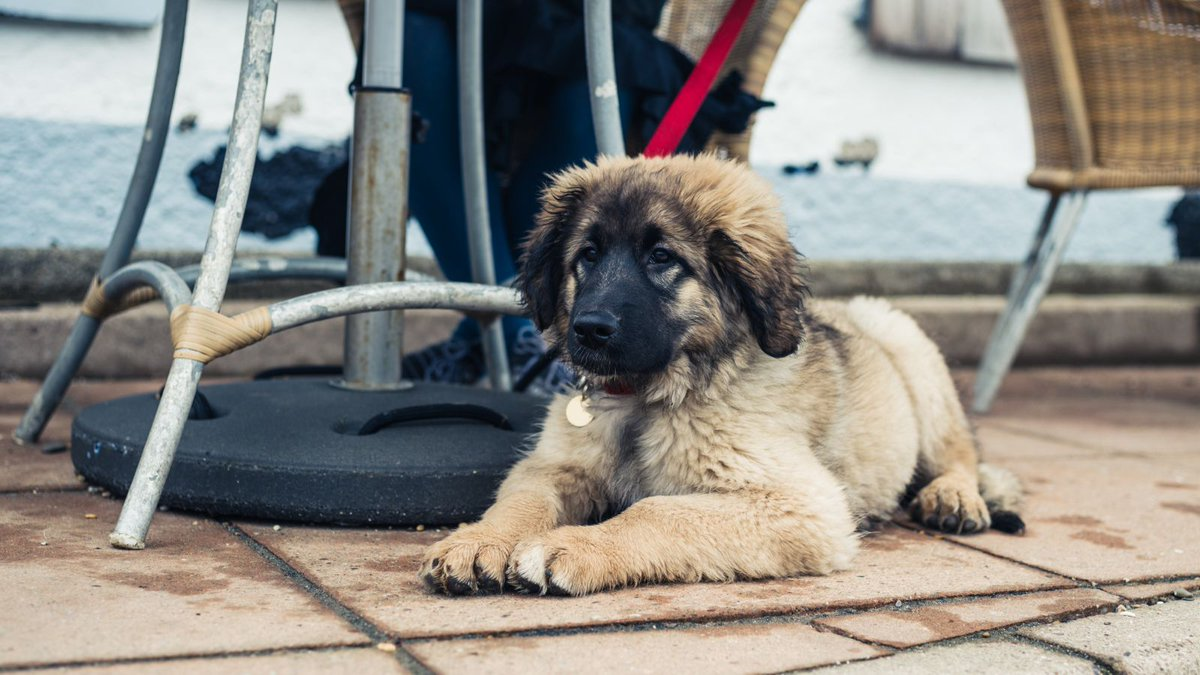 How some dog owners take advantage of ADA loophole to dine out with pets trib.al/KfxNyJs
