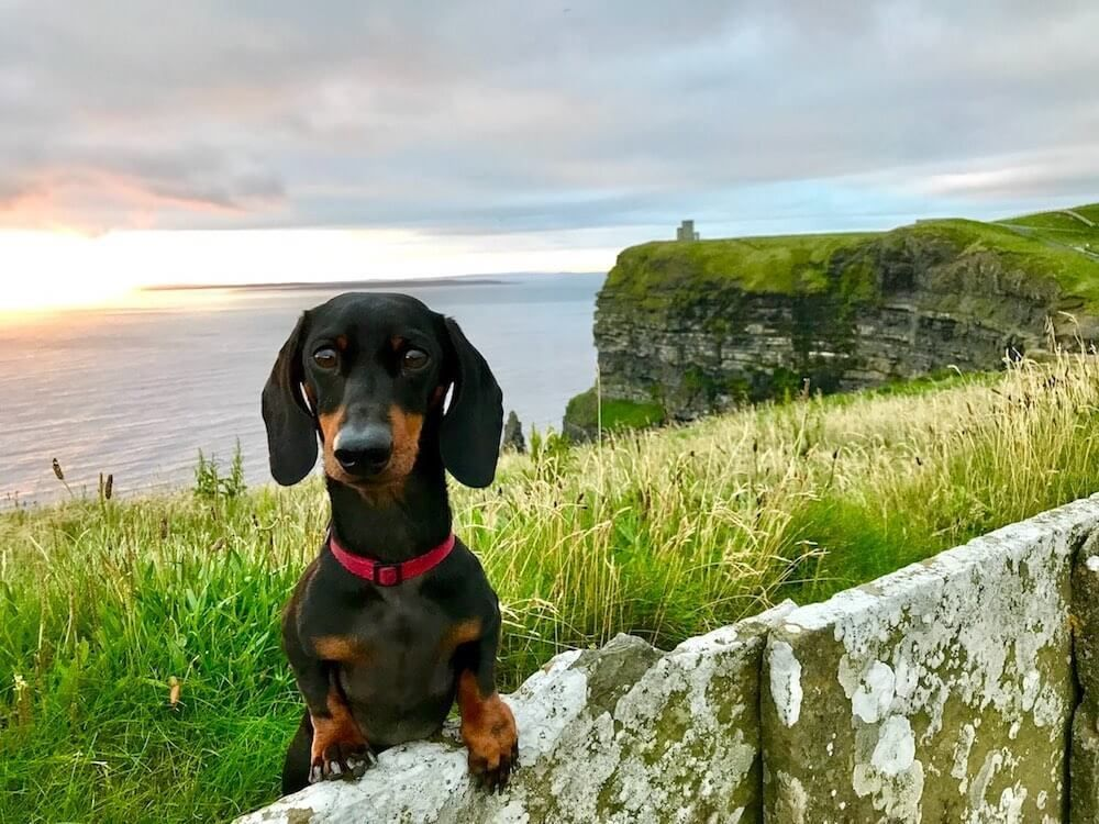 Be inspired to travel with your pup! Check out my interview with @thenomadpup  https:// buff.ly/2UFic3F  &nbsp;   #dogtravel <br>http://pic.twitter.com/MgD8Me8wVi