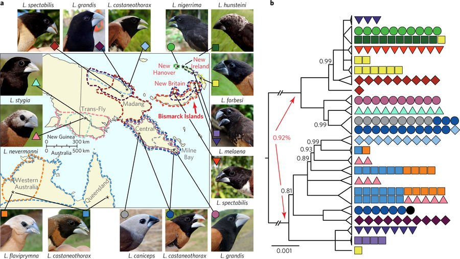 Mosaic genome evolution in a recent and rapid avian radiation nature.com/articles/s4155… #December2017highlight #ICYMI