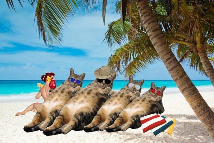 знаком картинки с котами про отпуск часть бухгалтерии