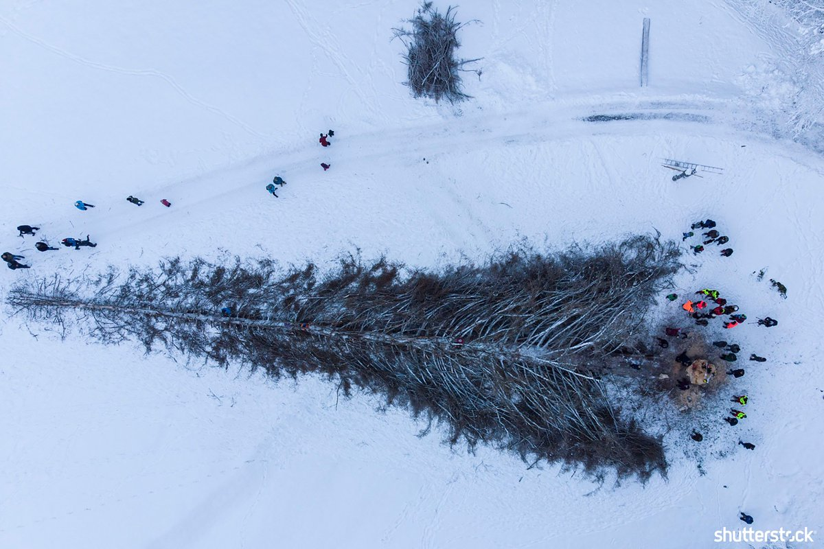 People surround La Panera, the tallest pine in Switzerland, after it was felled due to illness + more photos of the day shutr.bz/EditorsPicks | 📸 EPA-EFE/Shutterstock