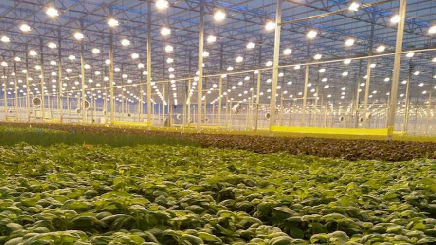 greenhousegrow's photo on #romaine