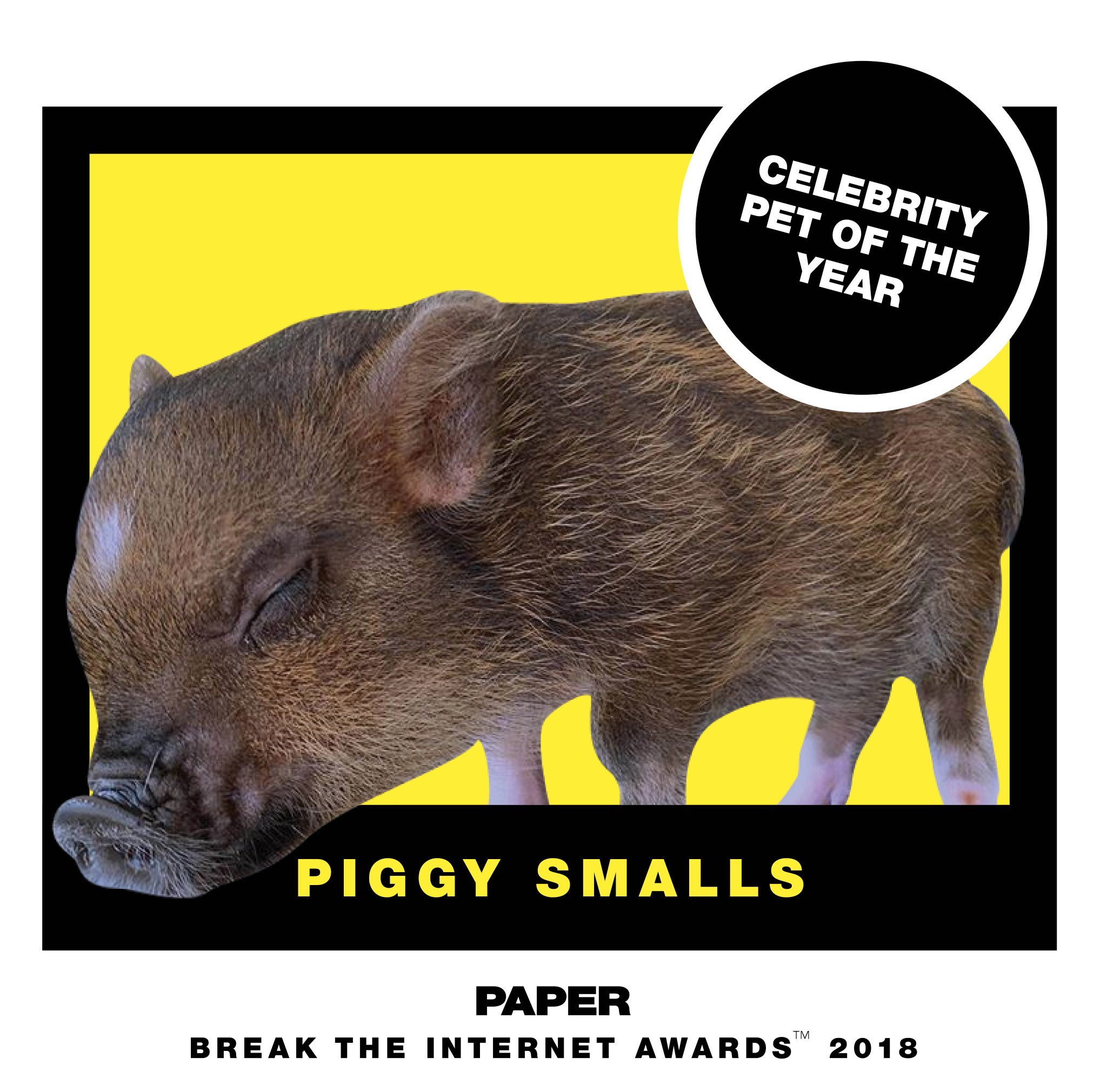 .@ArianaGrande's very own #piggysmalls for celebrity pet of the year! #breaktheinternet  https://t.co/Fnkqv7FGh6 https://t.co/54dd9S0zLp