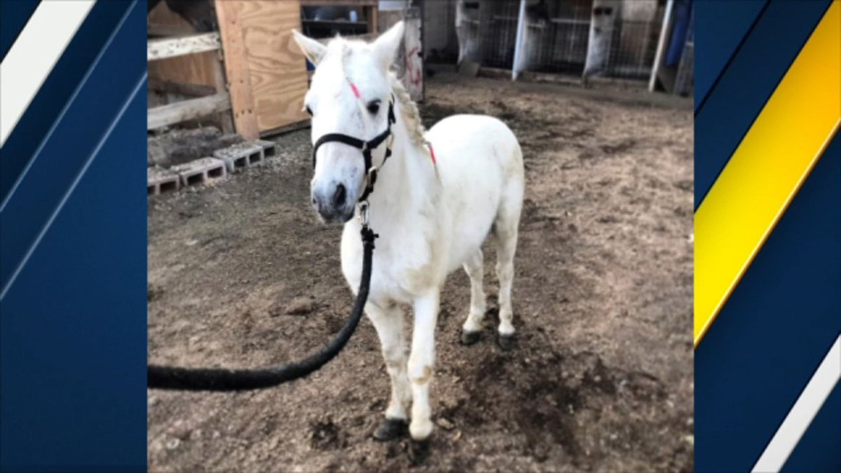 Have you seen 'Poncho?' La Puente family seeks help finding pony who vanished from Avocado Heights home https://t.co/8BaJLUgXZD