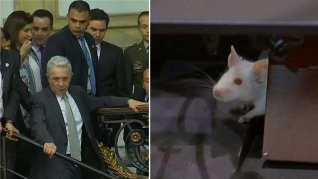 Colombia, topi in Parlamento: i deputati si rifugi...