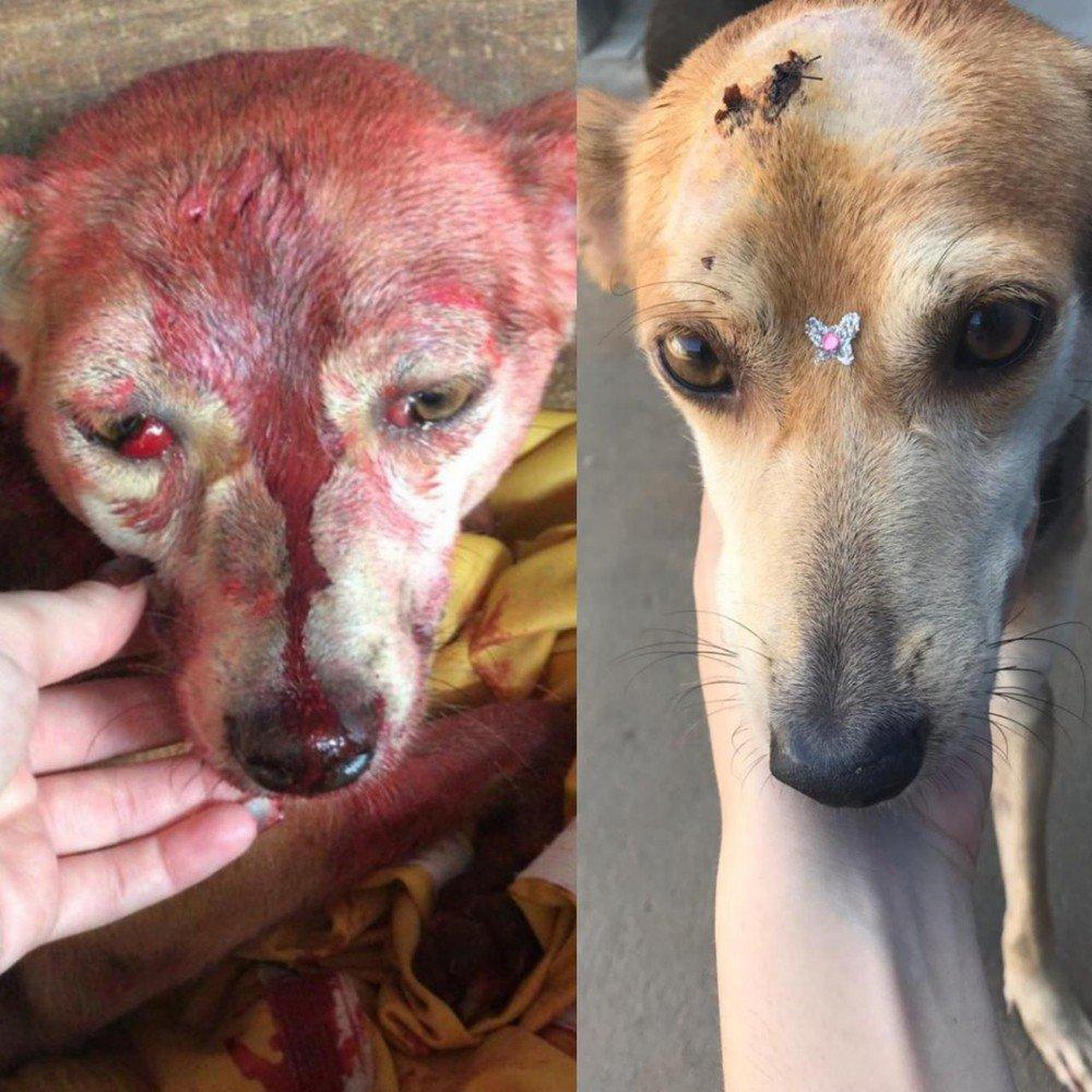 Cadela agredida com marretadas na cabeça recebe alta e ganha novo lar https://t.co/9fNnCQyJAi #G1