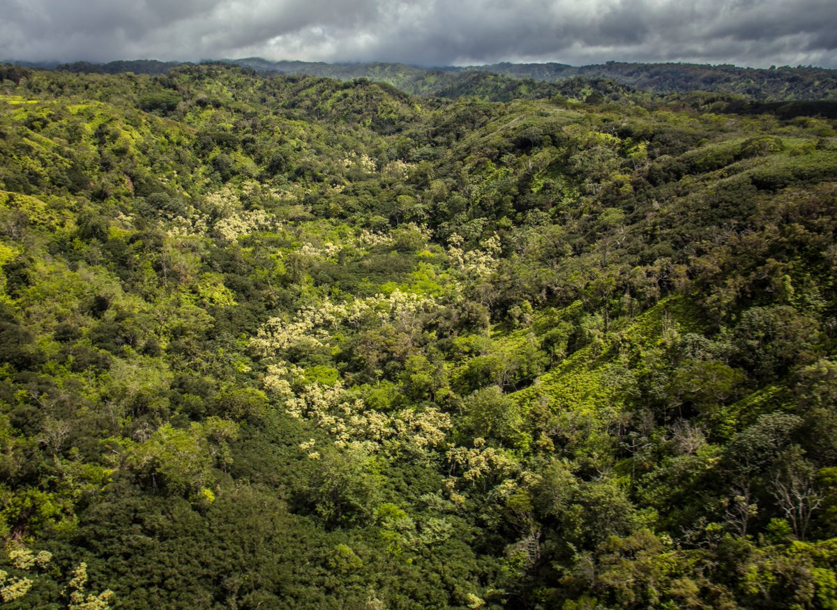 The @dlnr Division of Forestry and Wildlife is inviting community comments on two proposed additions to the State Forest Reserve System on Oʻahu: the ʻEwa Forest Reserve and the Honolulu Watershed Forest Reserve. https://www.facebook.com/HawaiiDLNR/photos/a.276310779076837/2334518739922687/?type=3&theater…