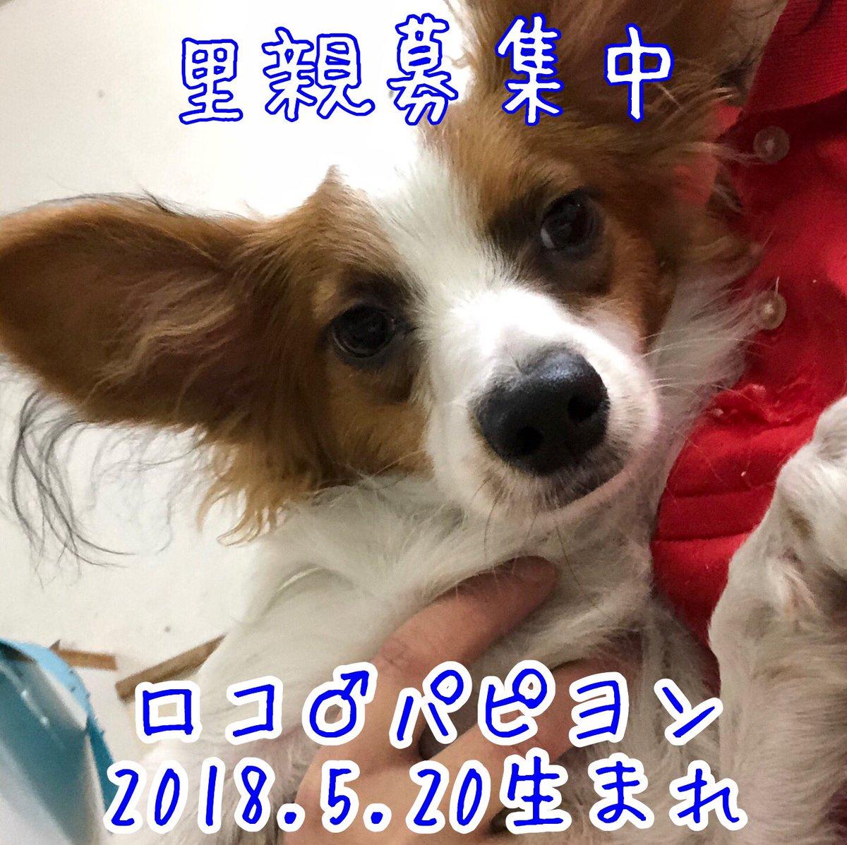 保護犬カフェ 鶴橋店 S Tweet 里親さま募集中 移動などの可能性