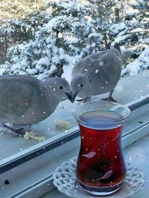 Hayırlı Cumalar! Kar taneleri ne güzel anlatıyor, birbirlerine zarar vermeden de yol almanın mümkün olduğunu. (Hz. Mevlana) #HayırlıCumalar Fotoğraf