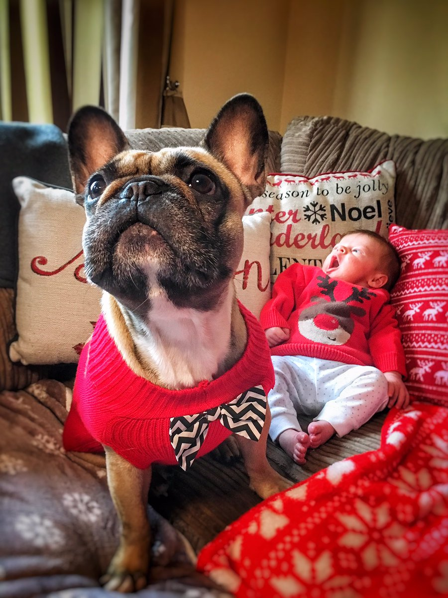 Happy #ChristmasJumperDay2018   Are any of my pals taking part?   Send me a pic if you are. We'd love to see them   Here's me and my bro @BBQBaby2   #Frenchie #frenchbulldog #HappyChristmas<br>http://pic.twitter.com/WCRy20rMXV