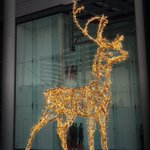 Image for the Tweet beginning: These beautiful reindeer have been