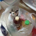 こんな可愛い調味料、どこに売ってるんですか!上目遣いの猫が可愛くて可愛くてやられた