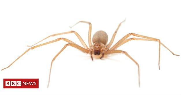 Pomada criada por brasileiros consegue neutralizar efeitos de veneno de aranha que causa necrose da pele, falência renal e até a morte das vítimas https://t.co/kjbC16YSPd